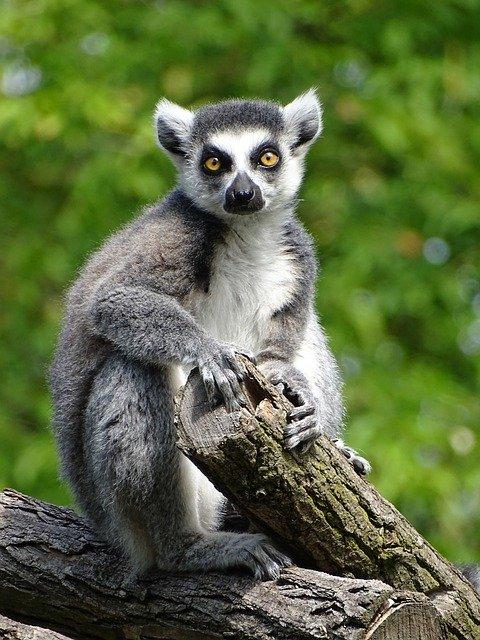 Debreceni állatkert és vidámpark